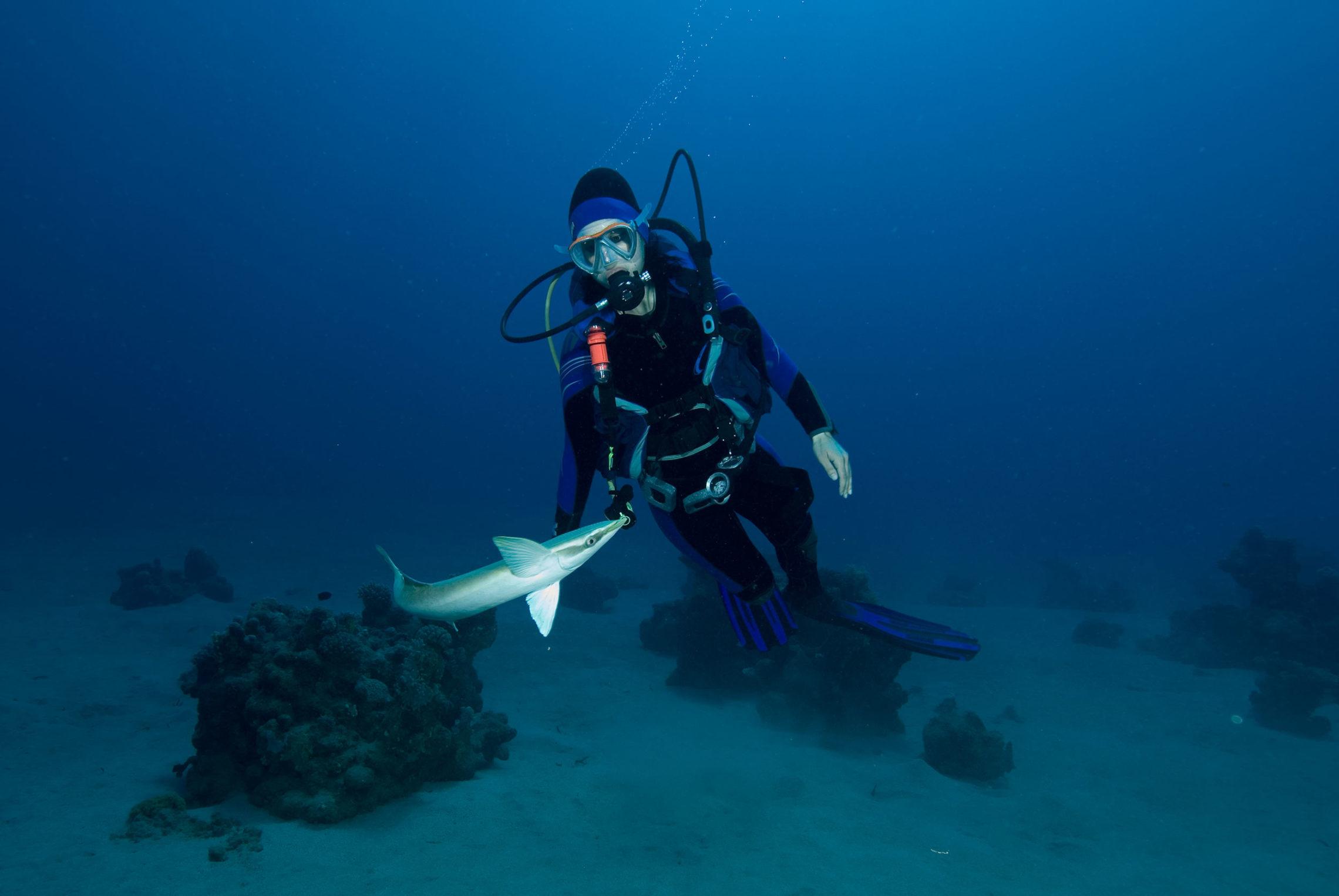 vacanze diving