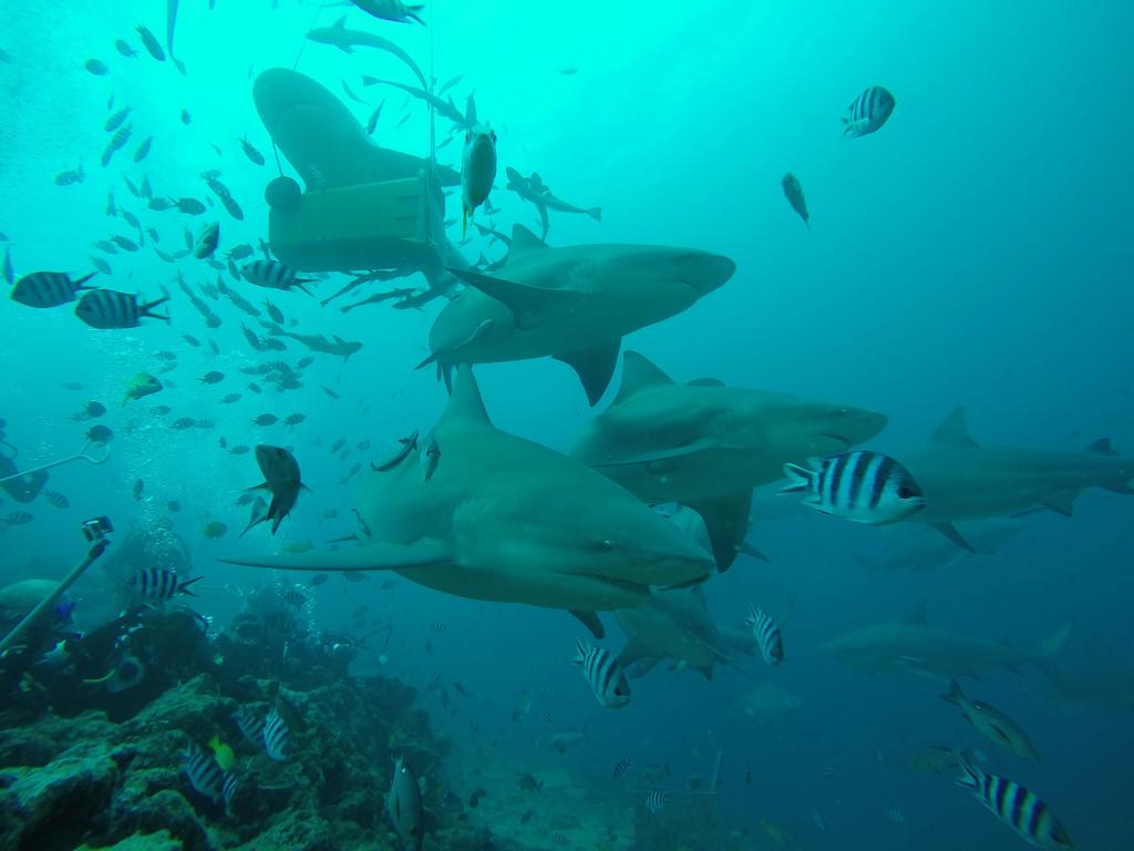 Vacanza per subacquei alle Fiji