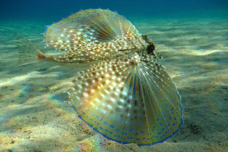 Vacanze per subacquei alle isole Fiji!
