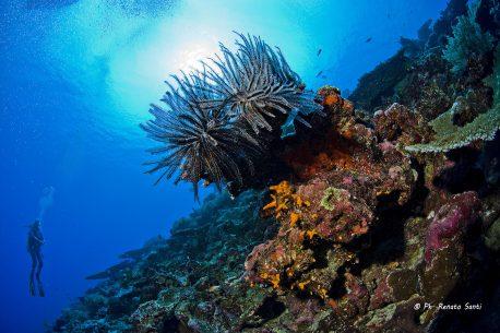 Viaggi per sub Fiji