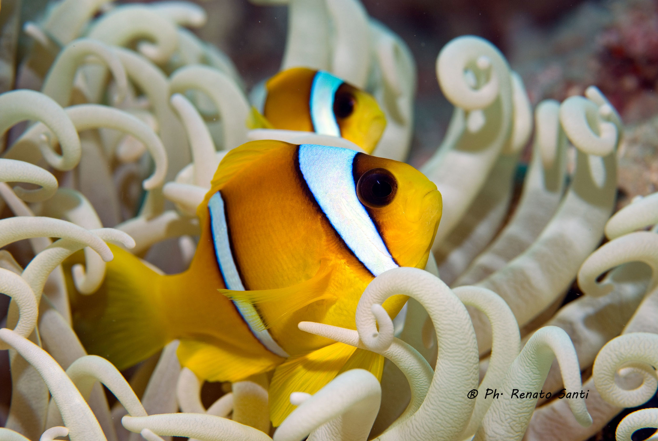 pesce nelle quotazioni di incontri di mare