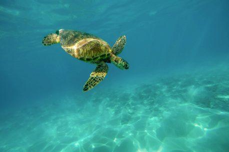 vacanze per subacquei in Oman