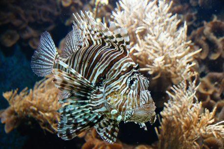 soggiorno diving alle Fiji