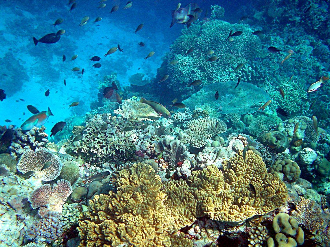 Immersioni in Papua Nuova Guinea