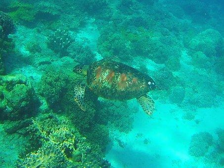 diving nelle Filippine