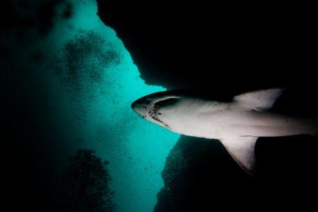 diving in Sudafrica