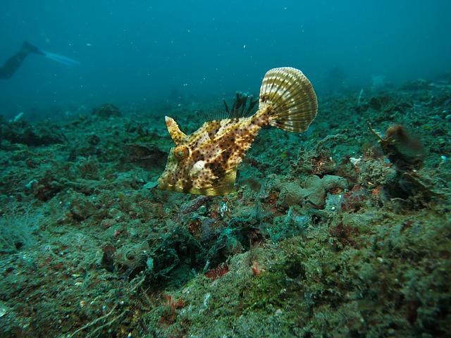 soggiorno diving indonesia