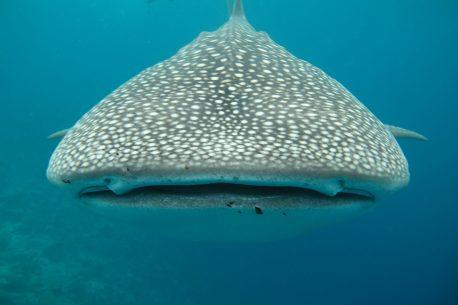 Immersioni nelle acque di Gibuti