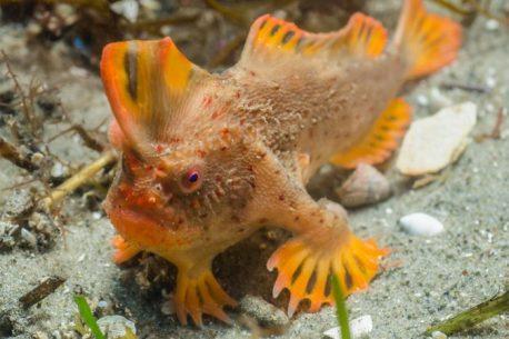 pesce più raro del mondo