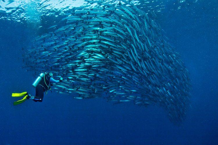 4 siti per le immersioni