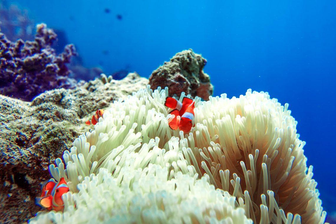 Viaggio sub in Indonesia Banka - Eco Lodge Coral Eye Resort