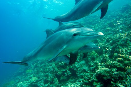 Immersioni subacquee in Oman