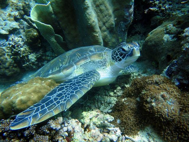 Viaggio diving nelle Filippine