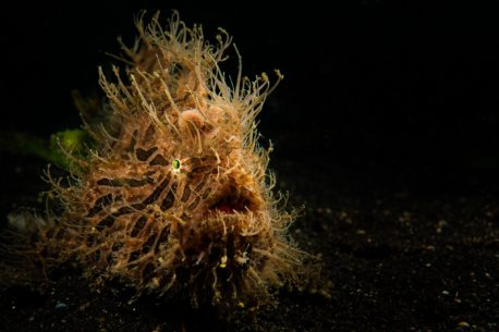 immersioni a Lembeh