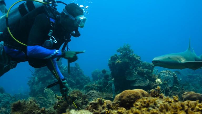 immersioni nel Mar dei Caraibi