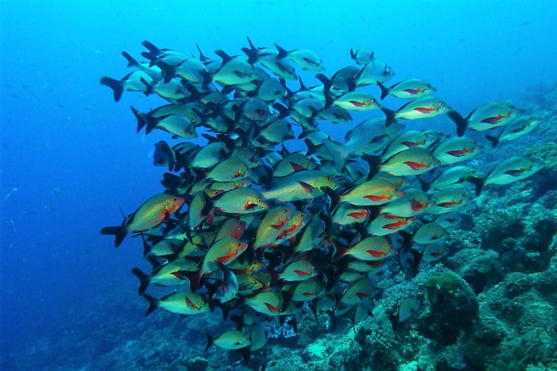 Immersioni nel sud del Madagascar