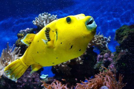 Vacanza per subacquei nelle Filippine