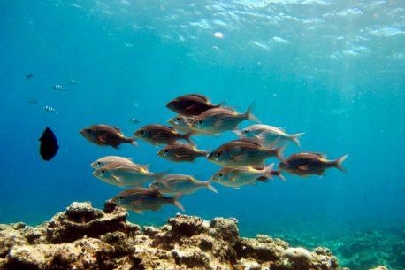 immersioni Okinawa