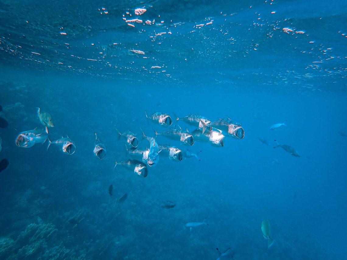 viaggio sub Ischia